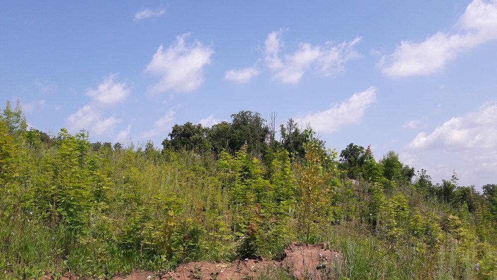 Několik pohledů naskokanský můstek, respektive jeho polohu a pozůstatky. Prvnísnímek je pořízen ve směru od lanové dráhy. Původní sportovní areál se starými skokanskými můstky je za stromy a není nasnímku vidět.