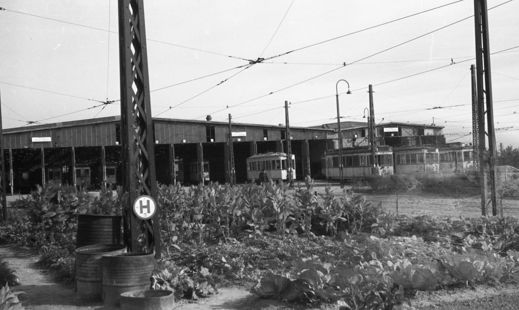 Náročná práce u berlínského DP nabízela nečekané benefity. S ohledem na nedostatek potravin byly volné – dříve zatravněné -plochy využívány pro pěstování potravin. Tyto plodiny pak byly přednostně distribuovány pracovníkům BVG. S ohledem na nedostatek základních potravin (nemalý počet občanů Berlína zemřel po válce v důsledku podvýživy) byla možnost získání potravin od zaměstnavatele velmi vítaná. (foto: archiv BVG)